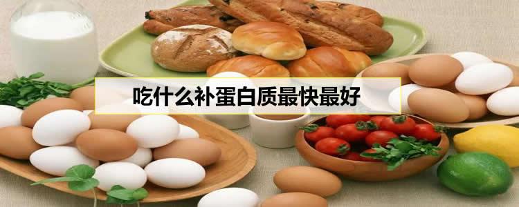 吃什么补蛋白质最快最好