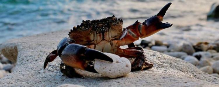 与螃蟹相克的食物有哪些