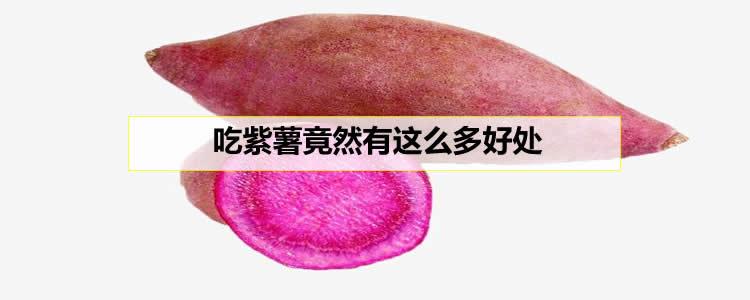 吃紫薯竟然有这么多好处