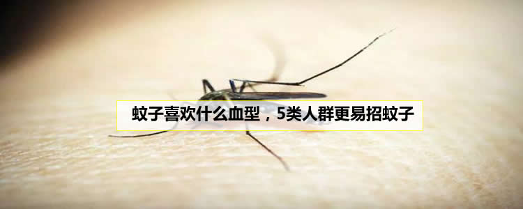 蚊子喜欢什么血型,5类人更易招蚊子