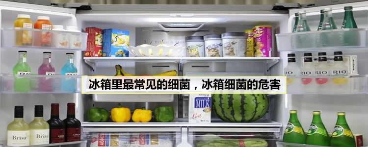 冰箱里最常见的细菌,冰箱细菌的危害