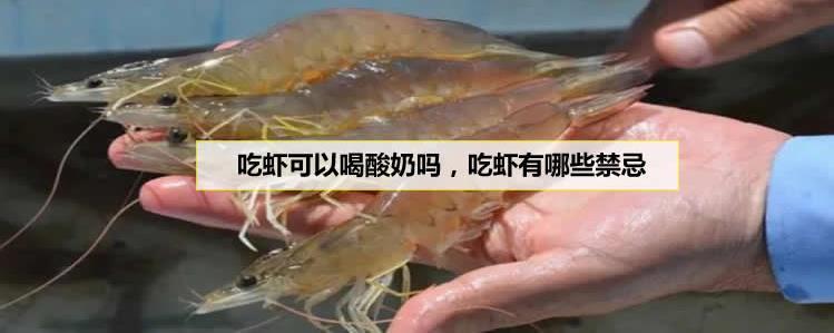 吃虾可以喝酸奶吗,吃虾有哪些禁忌